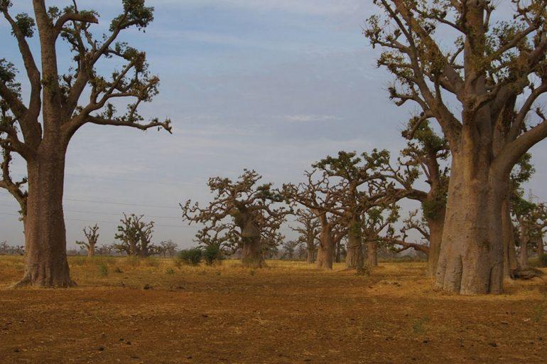 Сенегал — информация о стране