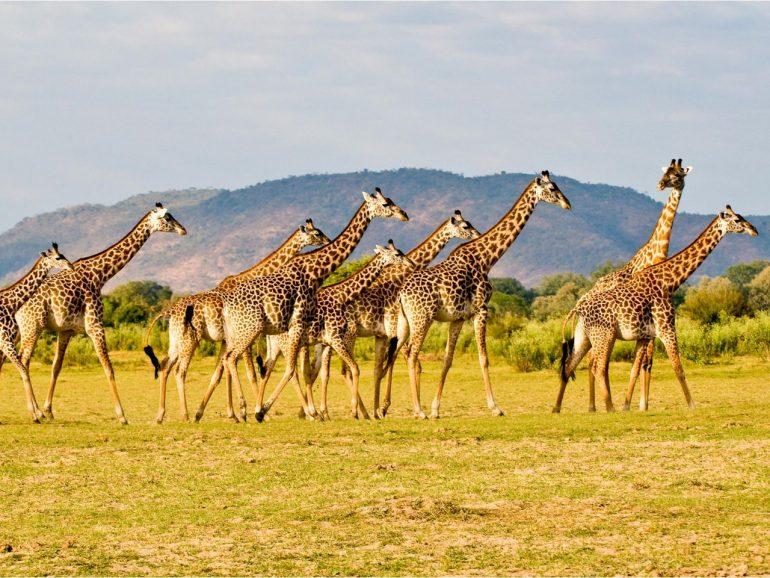 Замбия — информация о стране, достопримечательности, история