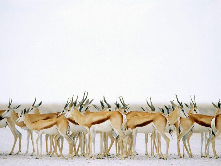 Намибия — фото страны (галерея обновляется)