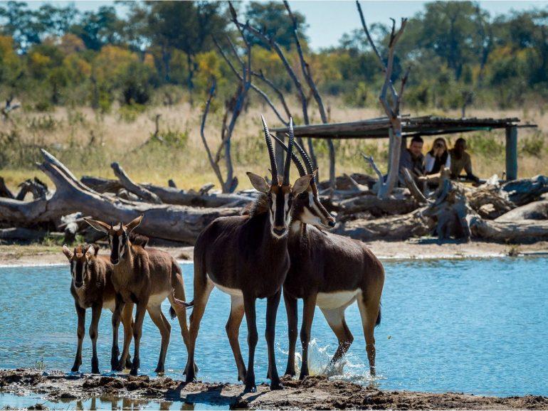 Зимбабве — информация о стране, достопримечательности, история