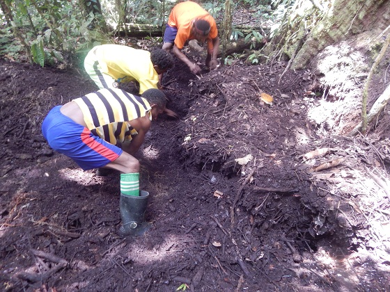 папуасы в лесу