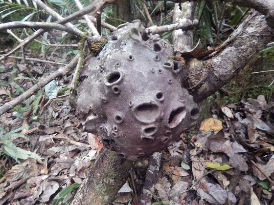 что-то интересное в джунглях