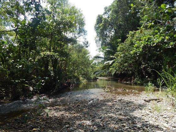 джунгли папуа новой гвинеи