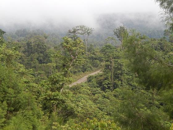 дорога в джунглях