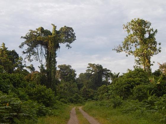 природа новой гвинеи джунгли