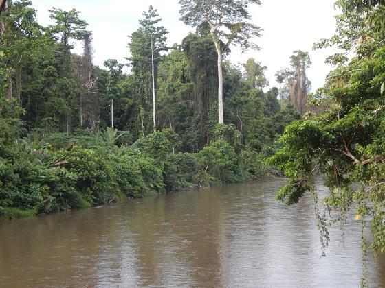 природа папуа новой гвинеи реки