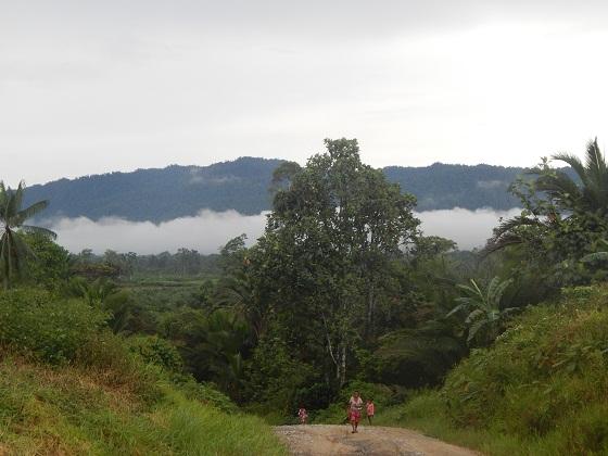 природа папуа новой гвинеи
