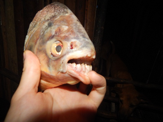 fish with teeth